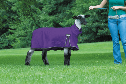ProCool � Sheep Blanket
